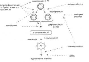 Точки приложения имуносупресантив