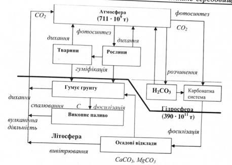 Биогеохимический цикл углерода
