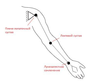 Схема руки человека фото