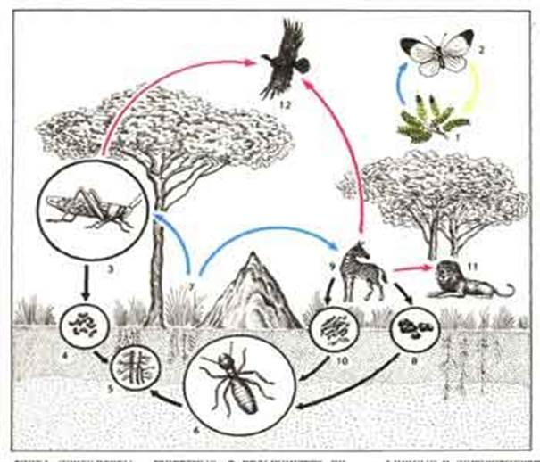 видите слепого живые организмы природы картинки-раскраски для 1 класса крепления